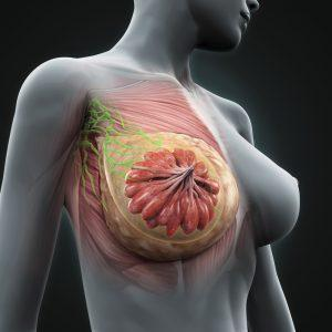 Submuskuläre Brustvergrößerung Köln in Beethoven Klinik