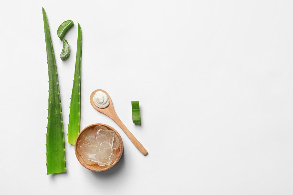 Aloe Vera Wirkung und Anwendung